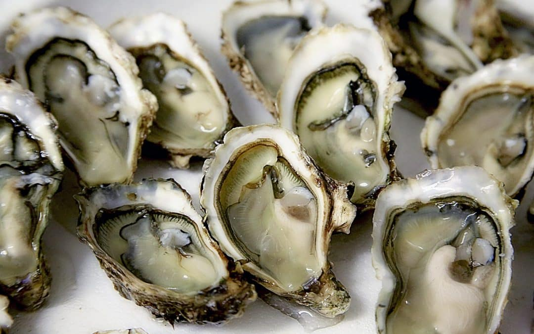 Comment bien choisir ses huîtres, recourir à un traiteur ?