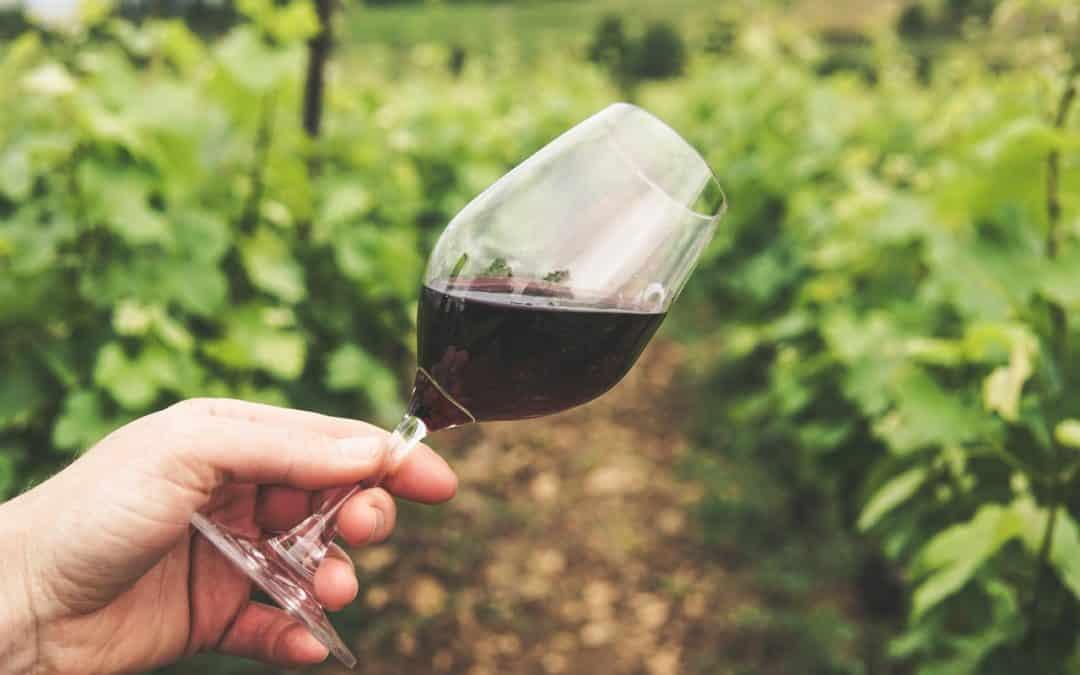 Quels sont les débouchés à la suite d'une formation aux métiers du vin?